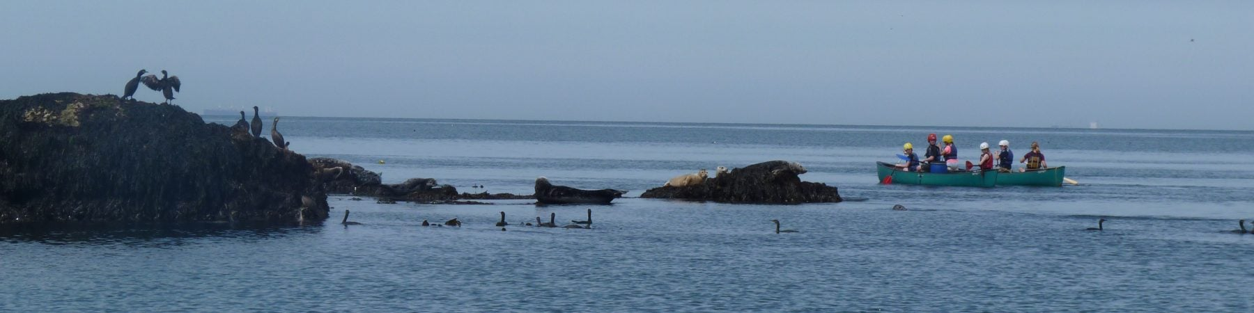 Group of 6 canoeing around Puffin Island with comarants on the rock and a calm sea.